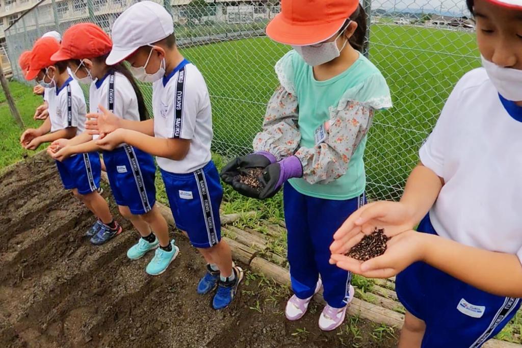 幸久小学校で箒草の種まき