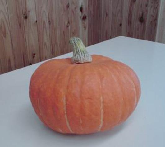 岡見かぼちゃ