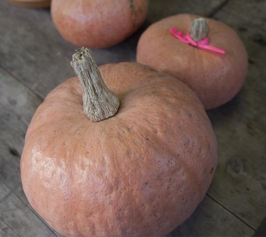 里川かぼちゃ